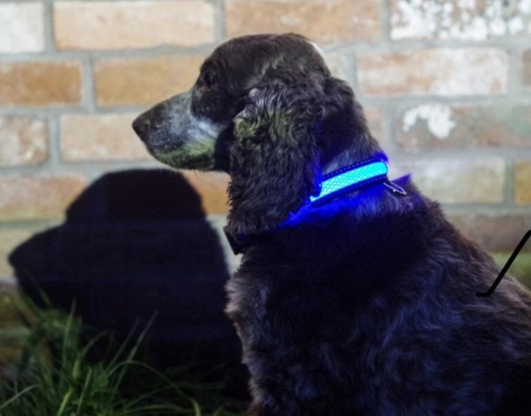 Illuminated Pets Light Up Collar - Aurina Ltd