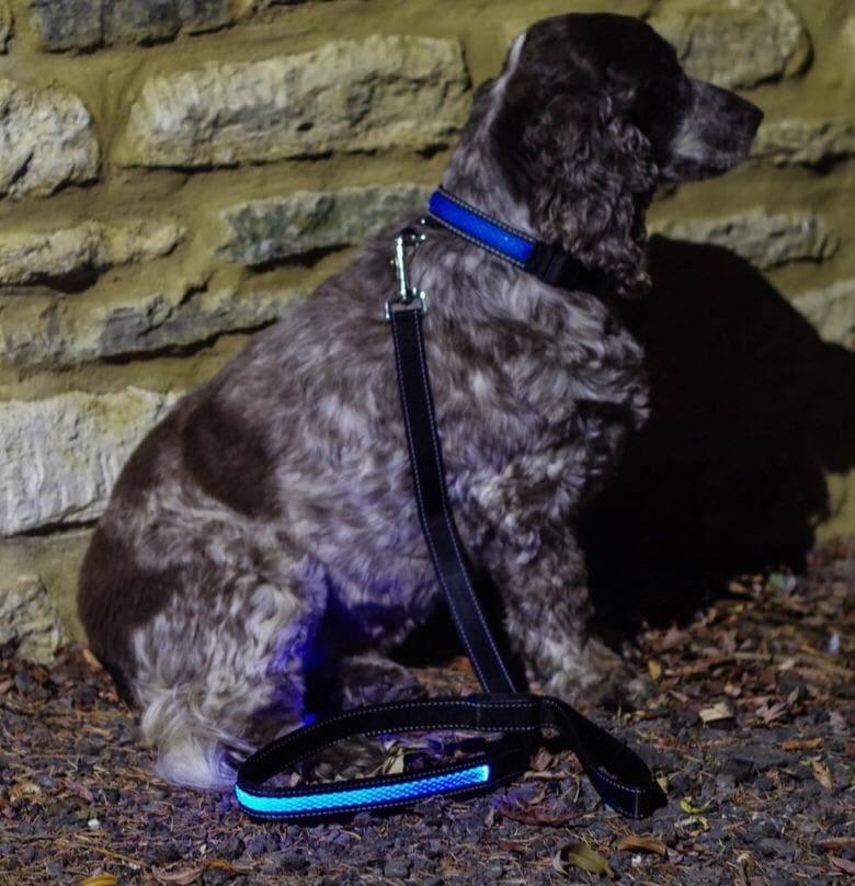Illuminated Dog Lead - Aurina Ltd