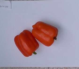 Ariane Sweet Pepper