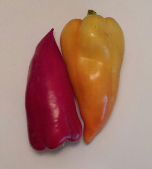 Bacskai Sweet Pepper
