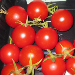 Lunchbucket Cherry Tomato