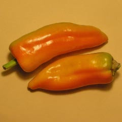 Marconi Golden Sweet Pepper
