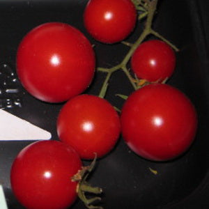 Pusa Ruby Cherry Tomato