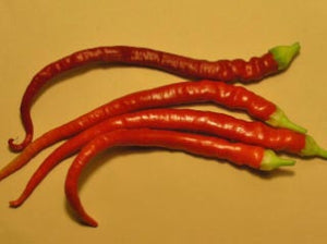 Sweet Cayenne Pepper