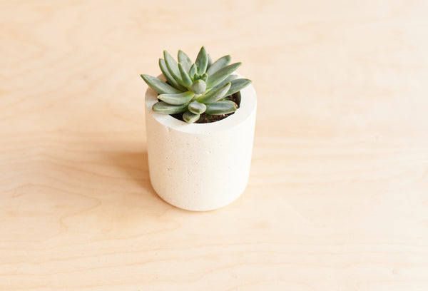 Small Conpot Planter in White