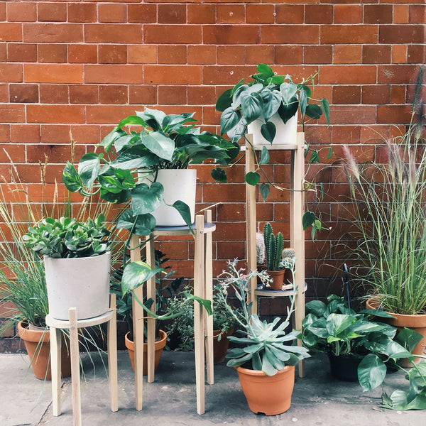 Plant Stands - Made to order - From £80