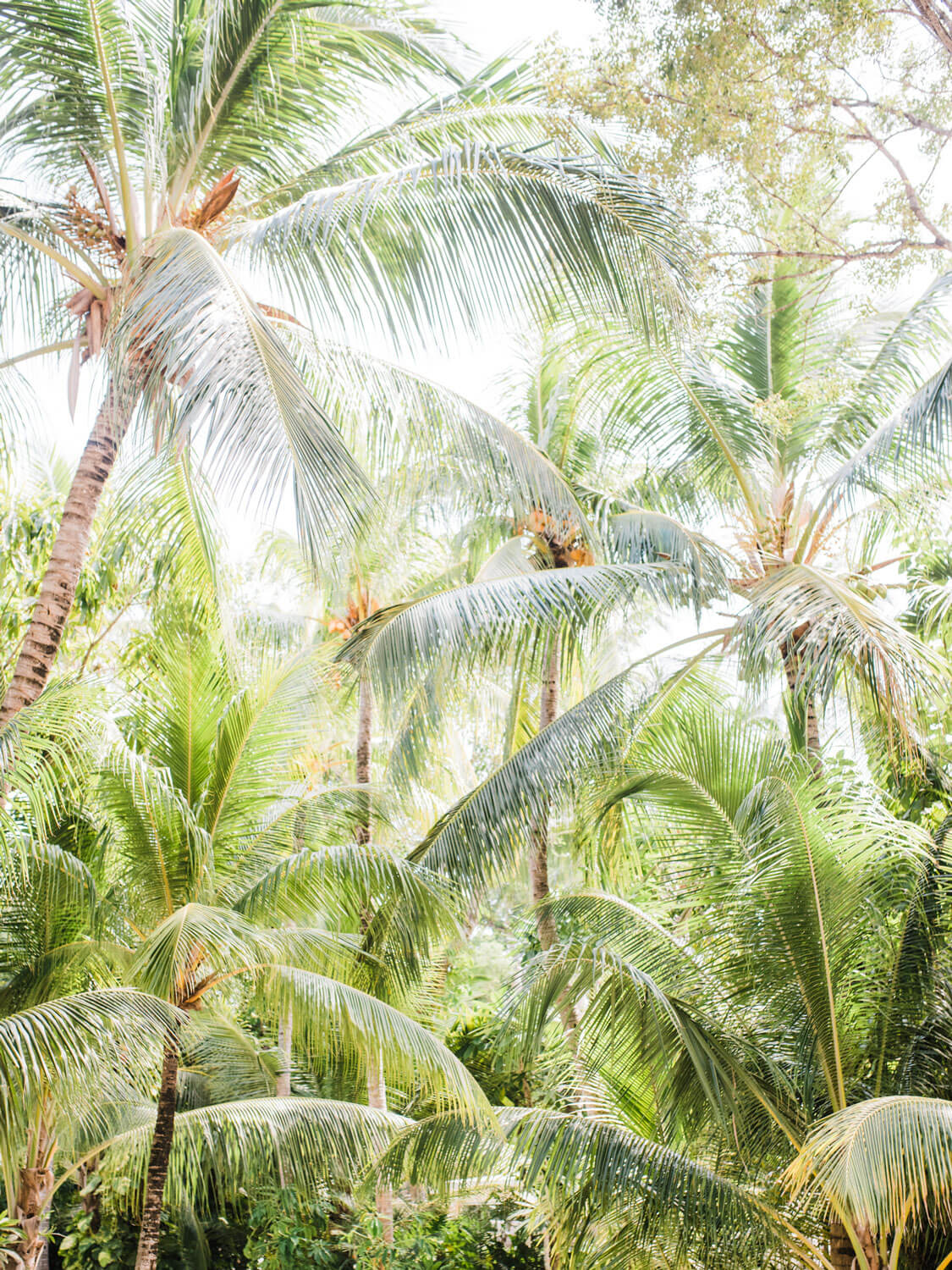Breeze Palms - Care Studio Prints