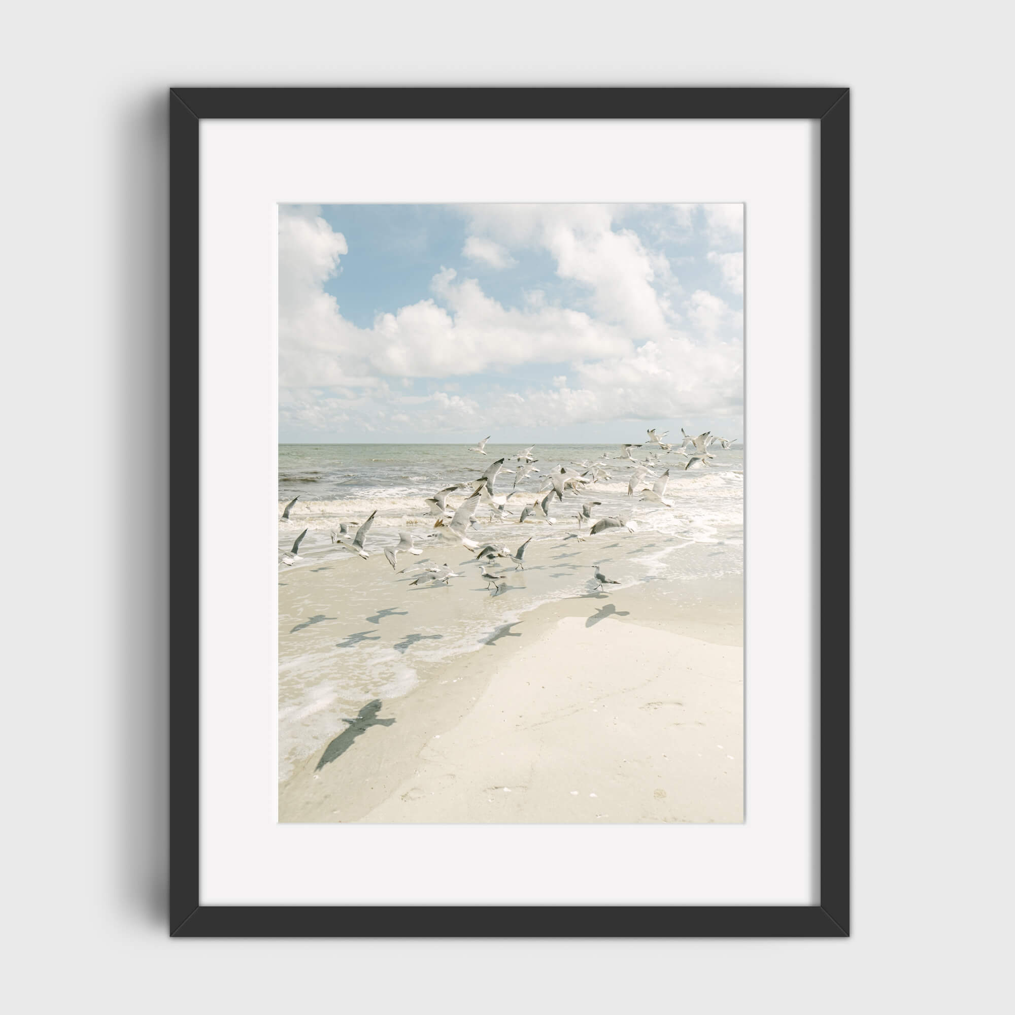Seagulls - Care Studio Prints