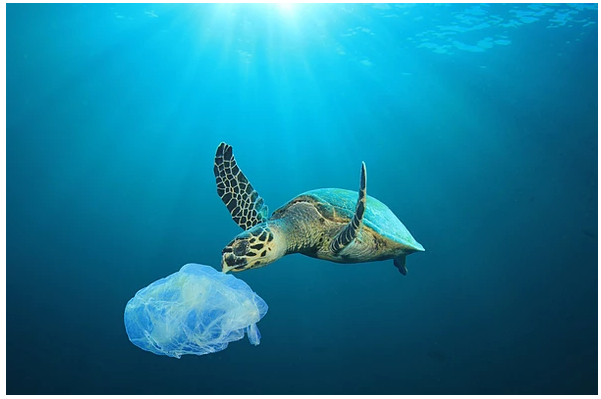 World Oceans Day: 20 Ways to Save The Ocean by Using Less Plastic