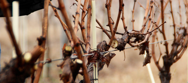 Thoughts in the pruning season