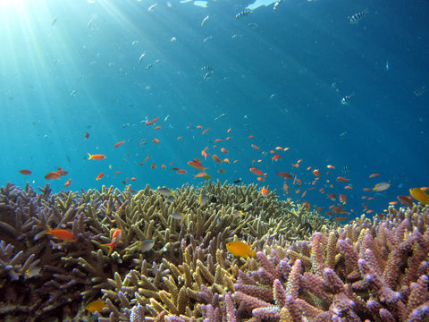 Coral Reef with fish and sun rays beaming through the water