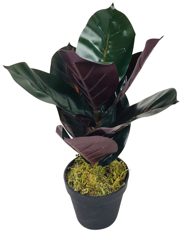 Artificial Rubber Plant 41cm - Soap Scent & Home