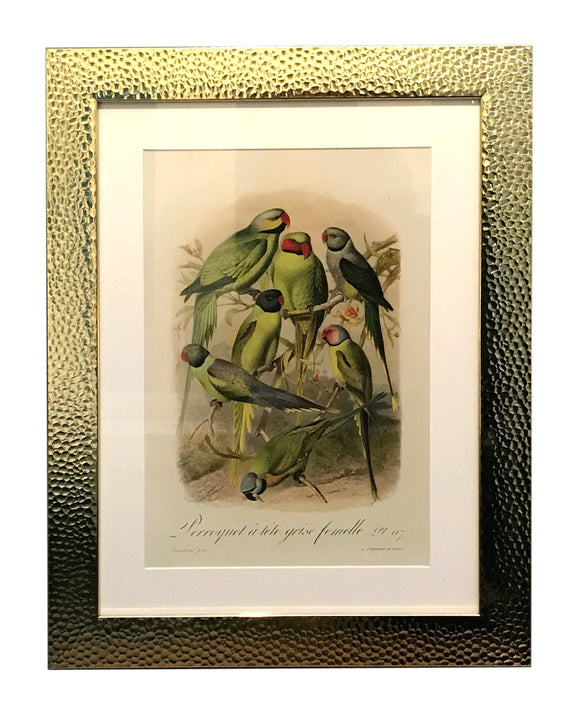 Beaten Gold Coloured Framed Bird Print - Different Birds - Soap Scent & Home