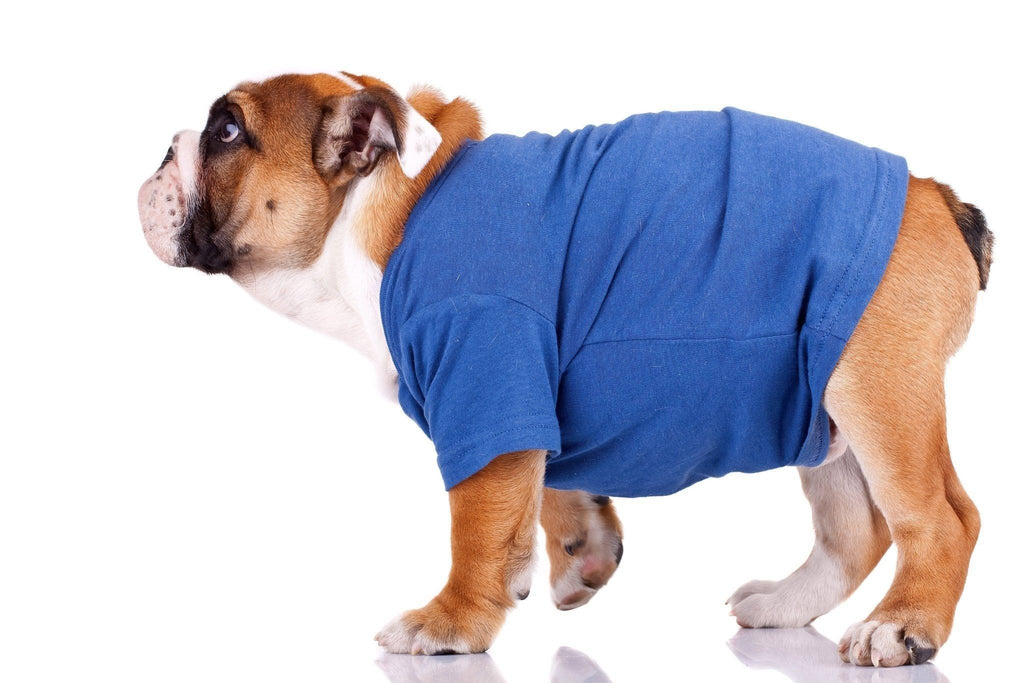 No Sewing Needed: 6 Easy Steps to Making a Dog T-Shirt