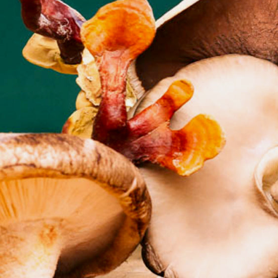Mushrooms and the Immune System