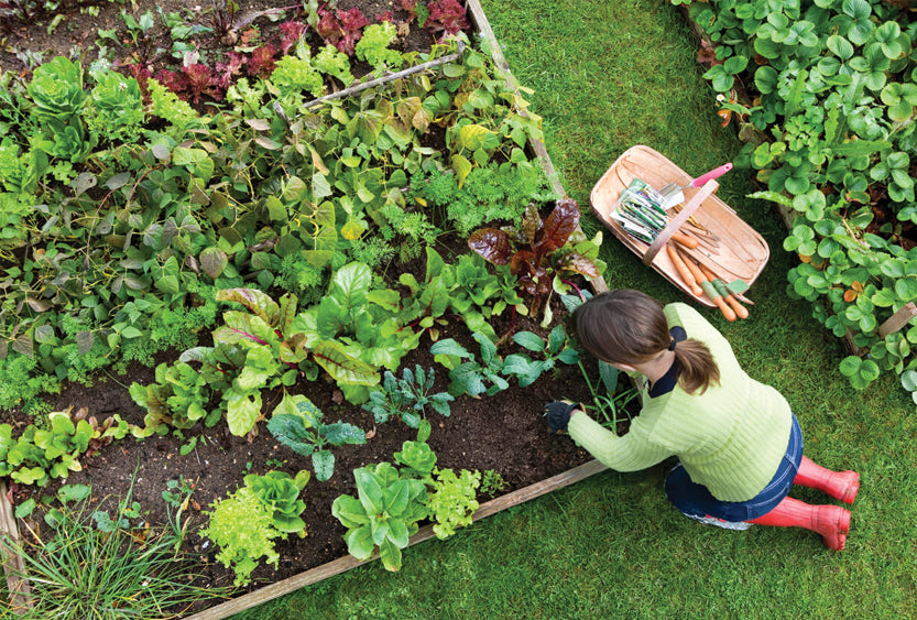 How To Plan Your Vegetable Garden