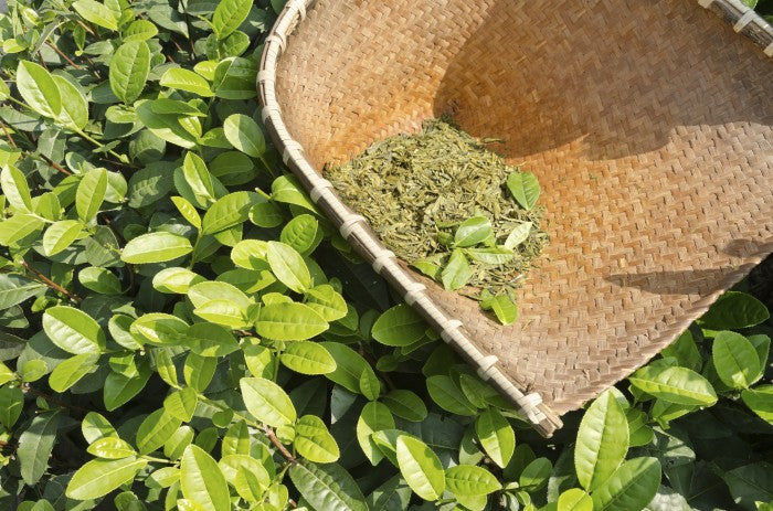 Get To Know Green Tea