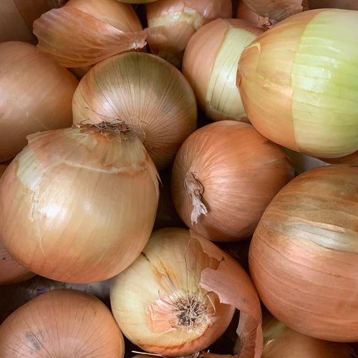 Organic Yellow Onion