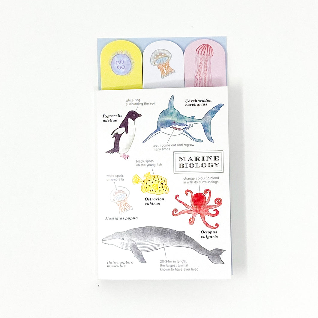 Green Flash Sticky Book Marine Biology - MAIDO! Kairashi Shop
