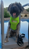 National Fur League Pet Harness - National Fur League
