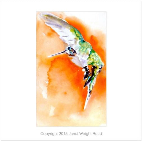 """Incoming!"" Hummingbird Print by Janet Weight Reed"
