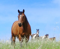 Magic of horses help us heal old wounds