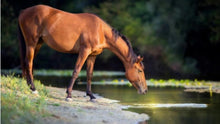 Load image into Gallery viewer, Healing through Horses Retreat: March 12-14, 2021
