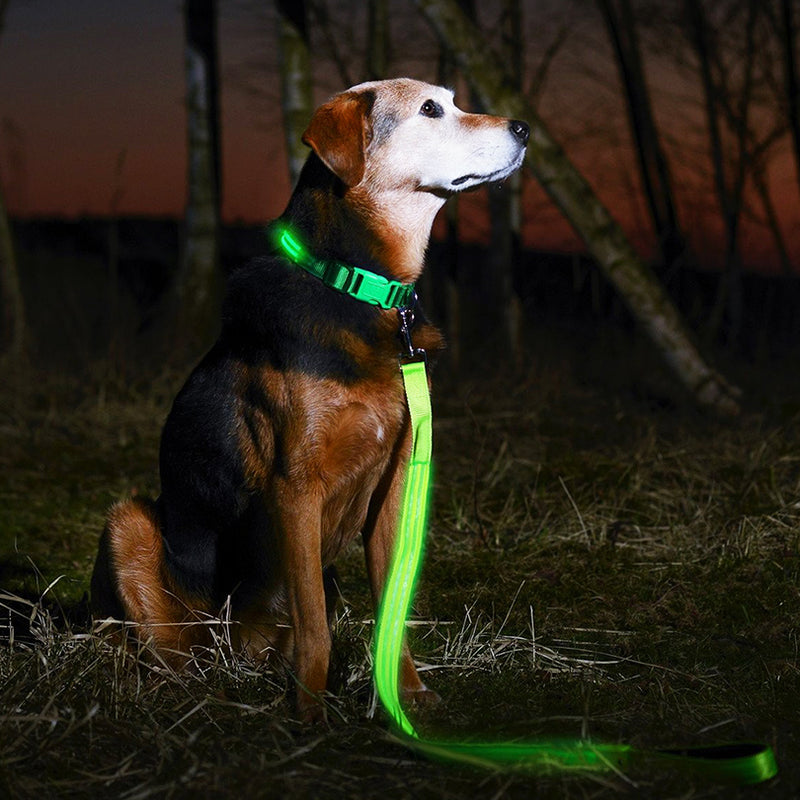 Looking for ways to keep you and your dog safe from vehicles and other motorists while you're out on your nightly run? Meet the light up dog leash. Research shows that most of the fatal accidents that occur at night and involve pets are caused by reduced visibility. However, these unfortunate incidents can easily be prevented with the use of a high-quality LED dog leash.  This leash features an easy-to-use metal clip that snaps onto the D-ring of the collar within seconds, and it is designed to help you and