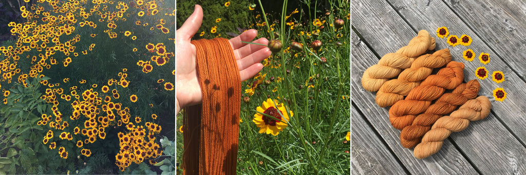 coreopsis flowers, naturally dyed yarn