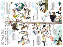 Load image into Gallery viewer, The Big Book of Birds