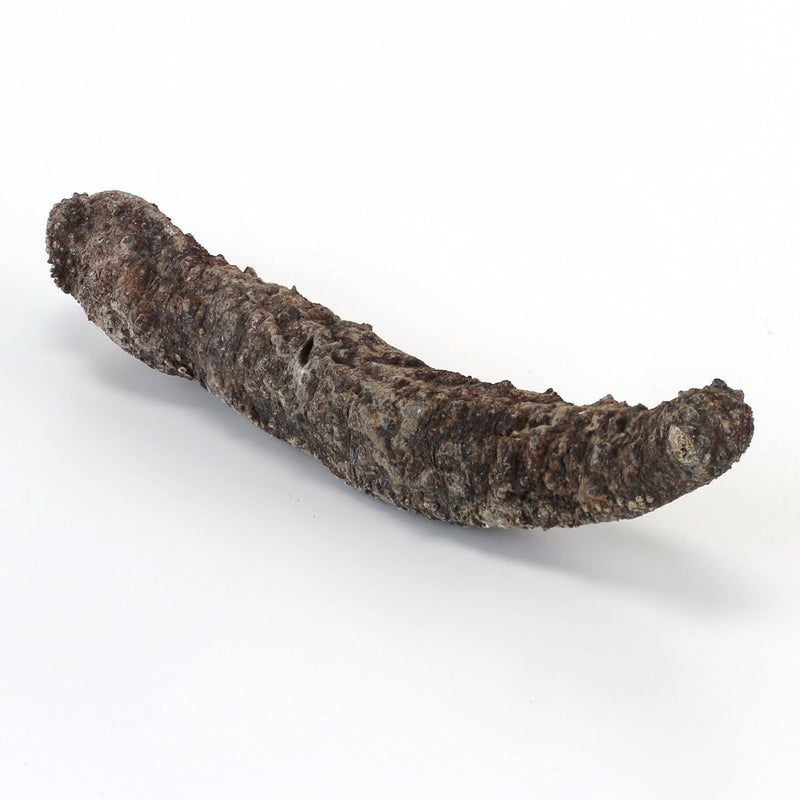 Alaska Wild Caught Red Sea Cucumber Large - 8 Oz