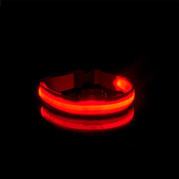 Night Time LED USB Pet Collar