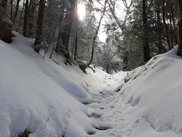 Snow-covered trail