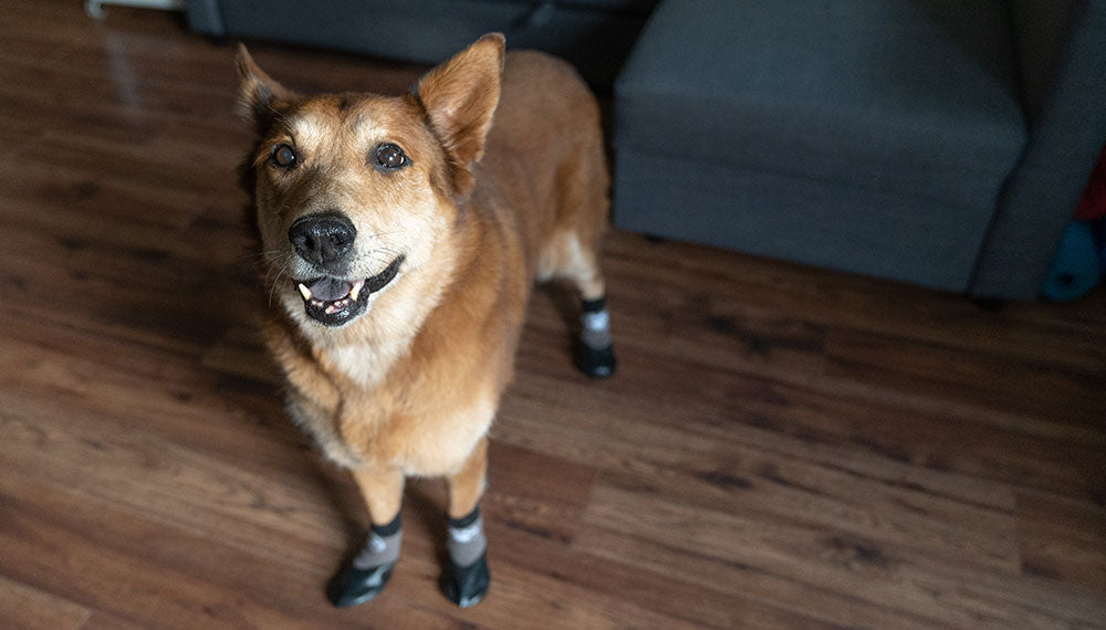 German Shepard Chow Chow with Grippers Dog Socks on Paws