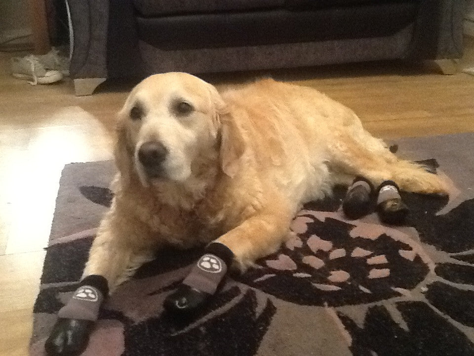 Grippers Dog Traction Socks