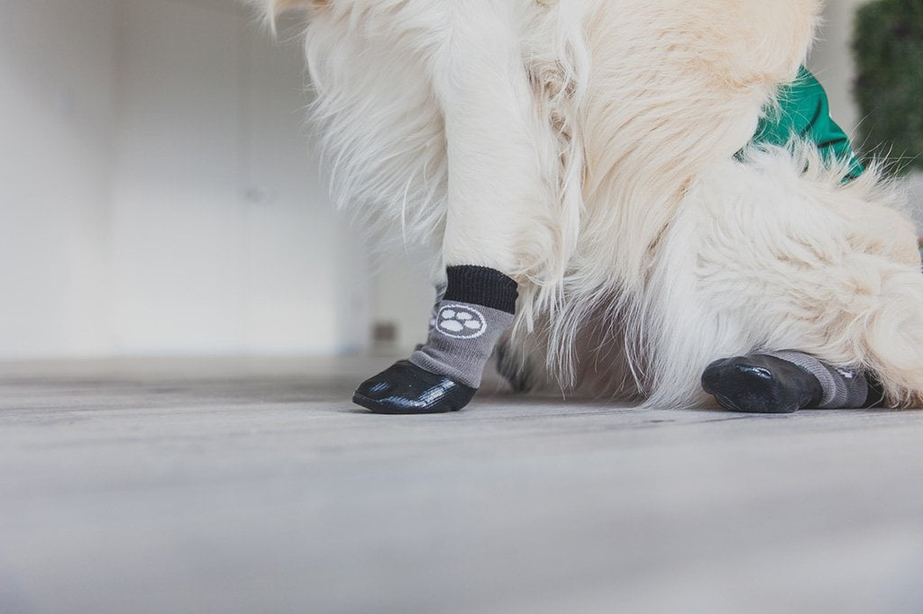 Grippers Non Slip Dog Socks Dog Quality
