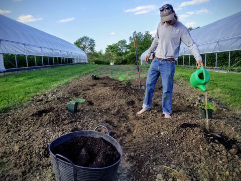 Curtis preparing to plant giant pumpkins with compost and bioinnoculants, 2020
