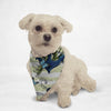 Blue Anchor Cat & Dog Bandana