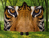 Tiger Eyes Hooded Blanket