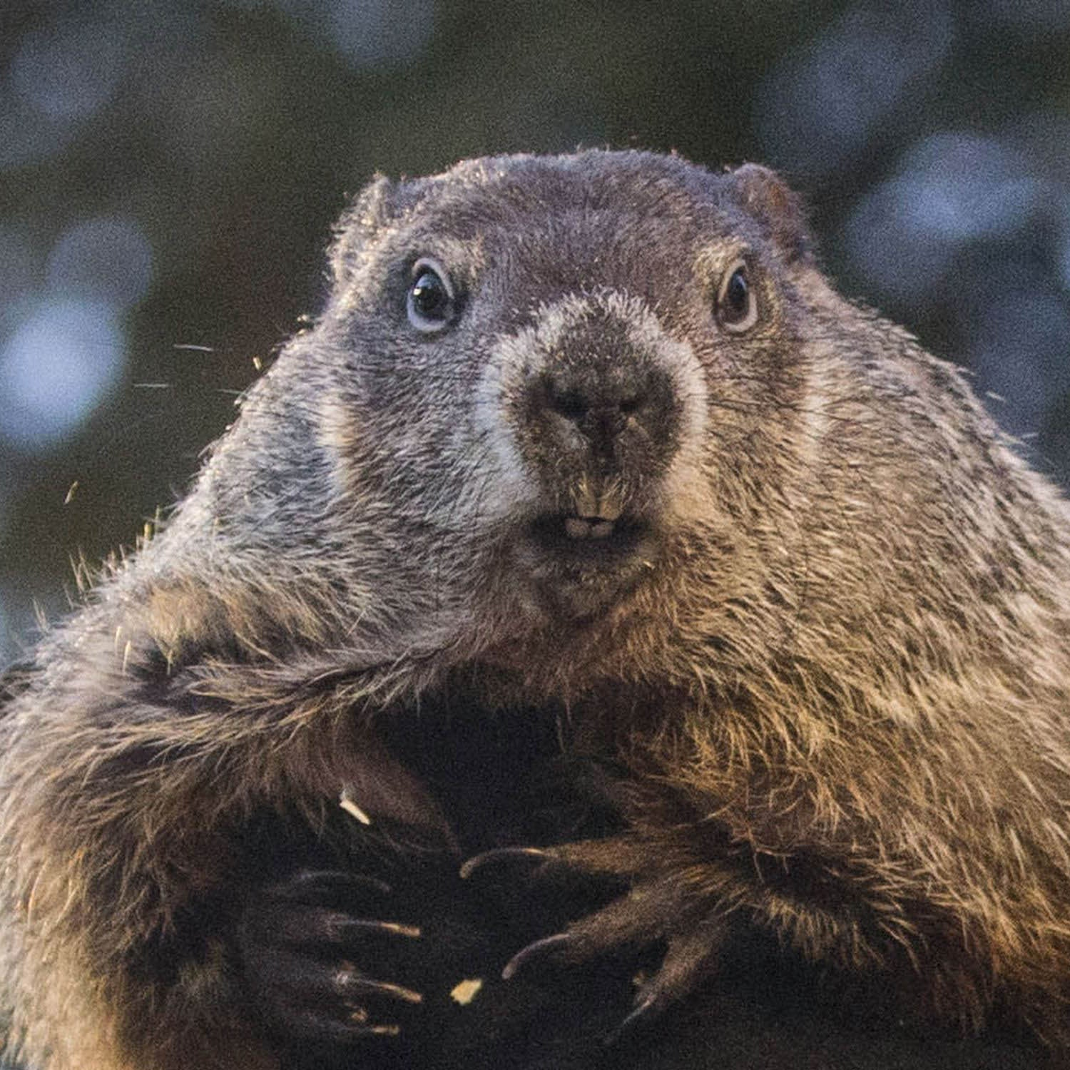 Well, It's Groundhog Day... Again