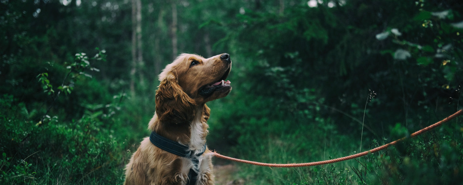 Proozy Pups: Top 5 Active Lifestyle Doggos, Good Boys, and Good Girls