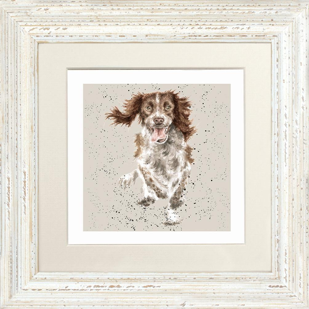 Wrendale Designs Springer Spaniel Dog Framed Card - White Frame (23 x 23cm)
