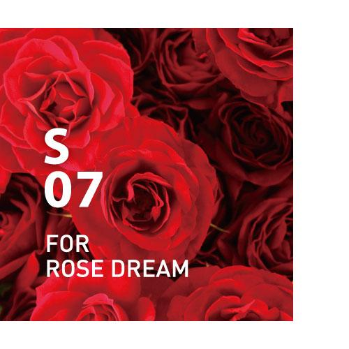S07 FOR ROSE DREAM