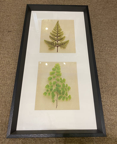 The Art Group Two Fern Framed Picture
