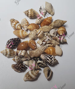 Small sea shells