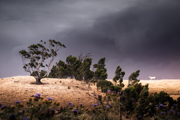 Dark clouds over trees in the Adelaide Hills