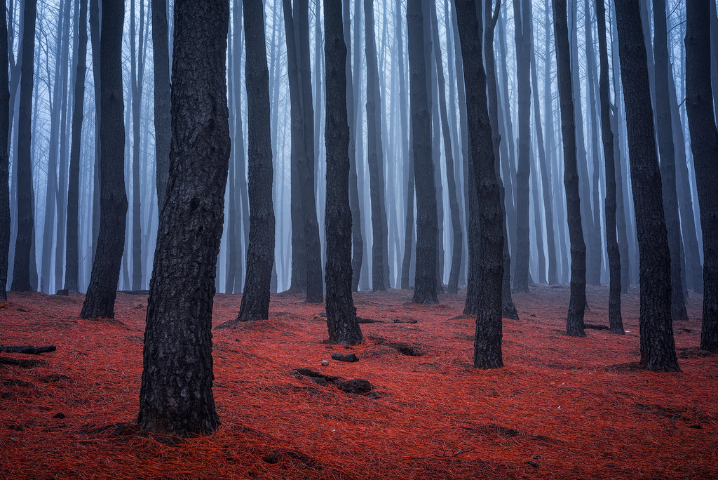 Burned forest in Gumeracha from Sampson Flat fire, Adelaide Hills