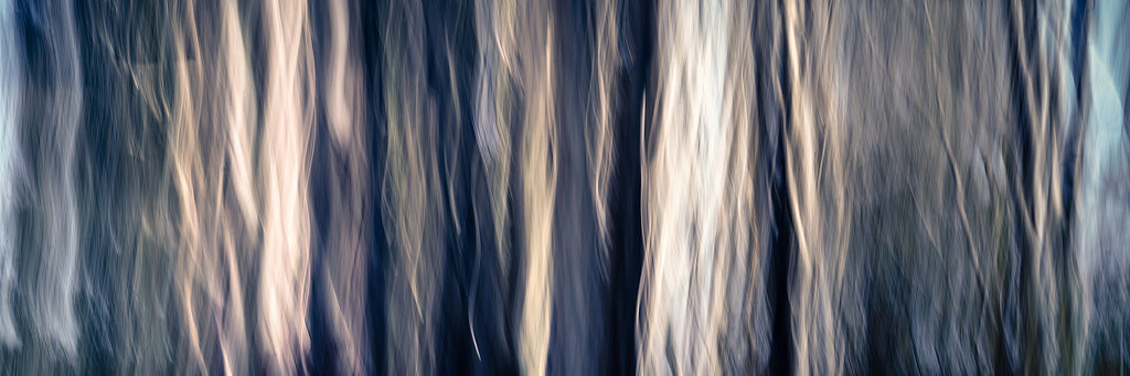 Abstract photo of trees in the Clare Valley