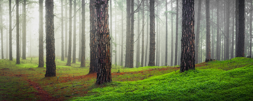 Misty forest in the Adelaide Hills, South Australia