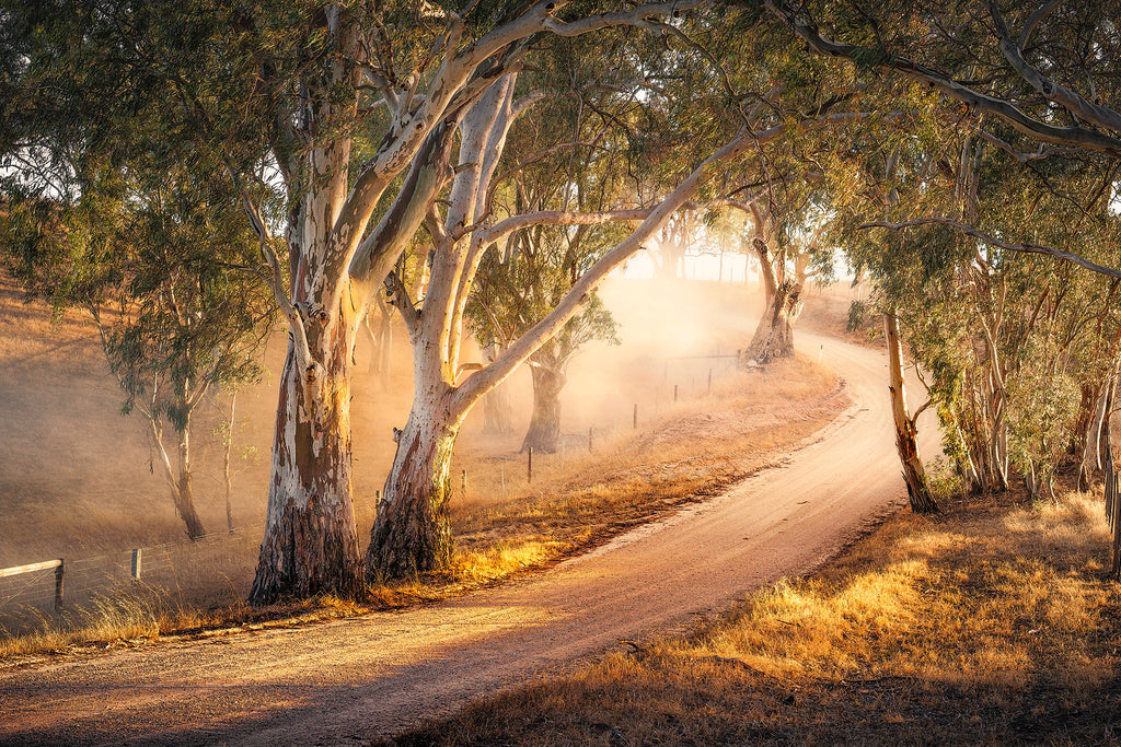 Warm light in the Adelaide Hills